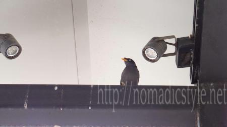 スタバで出会った鳥