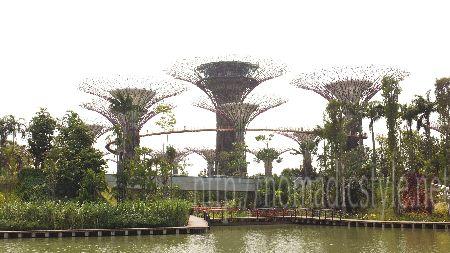 [シンガポール探訪記] Day8-1 ガーデンズ・バイ・ザ・ベイ