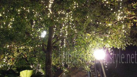 シンガポール ハーバーフロント 夜景 7